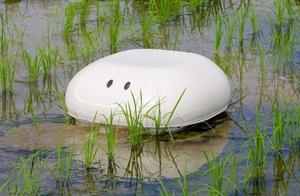 """这只日本的""""鸭子""""机器人取代了稻田里的农药"""