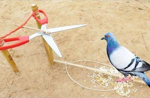 哪个缺德想出来的陷阱,还真有鸟儿被骗上当!