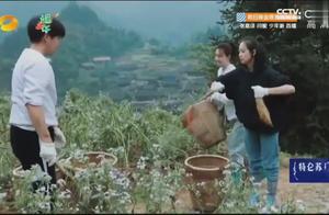 向往:带领4朵金花上山拔萝卜,宋茜直接手撕萝卜杆,惊呆彭彭