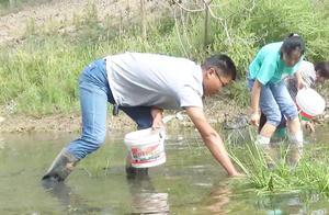 农村老家大河落水,小伙组团浑水摸野货,河蚌田螺小龙虾爆桶了!