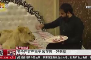 男子在家养狮子,狮子在床上吹空调好惬意,来访客人却纷纷被吓坏