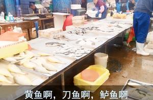 来青岛必逛的海鲜市场,每天上百辆车送货,从凌晨到半夜
