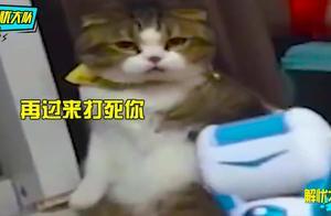 天下武功,唯快不破!练过武术的猫咪果然不一样,你还敢摸吗?