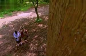 两三天才能砍断的树,小伙一炷香就能砍断,一斧子下去妖界都惊动