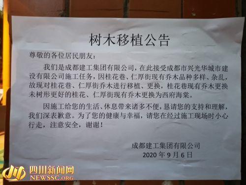 成都桂花巷桂花树成片被砍怎么回事 官方回复说了什么