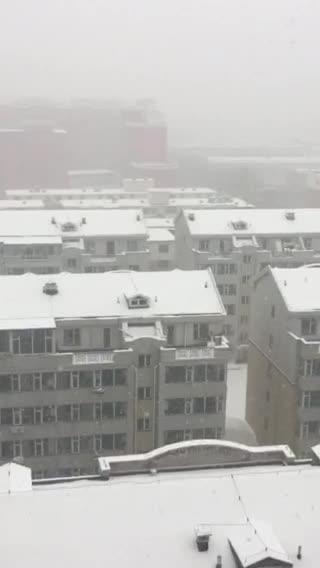 东北鹅毛大雪❄️