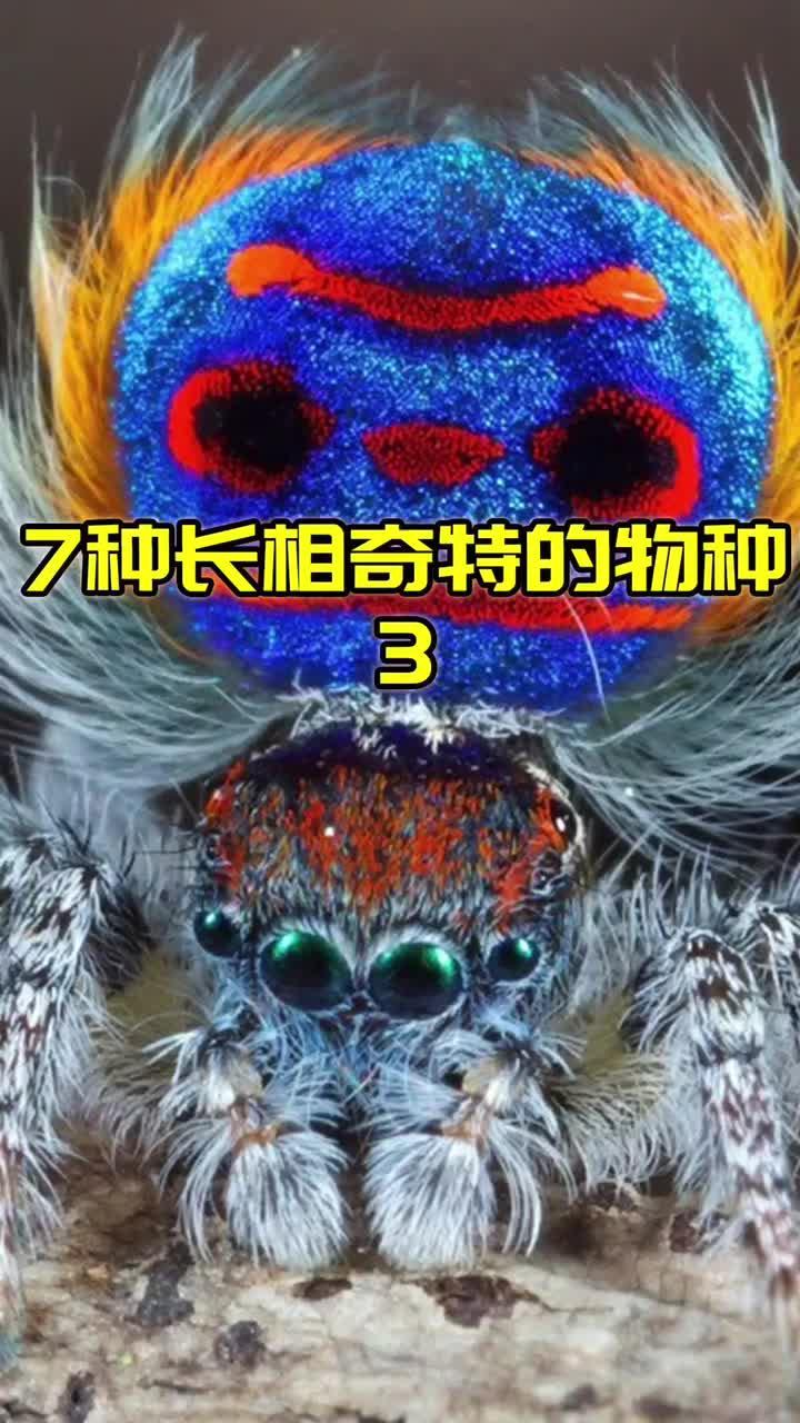 7种长得像外星生物的地球物种(3/3)