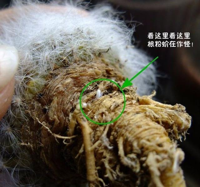 怎样才能杀灭土壤线结虫?