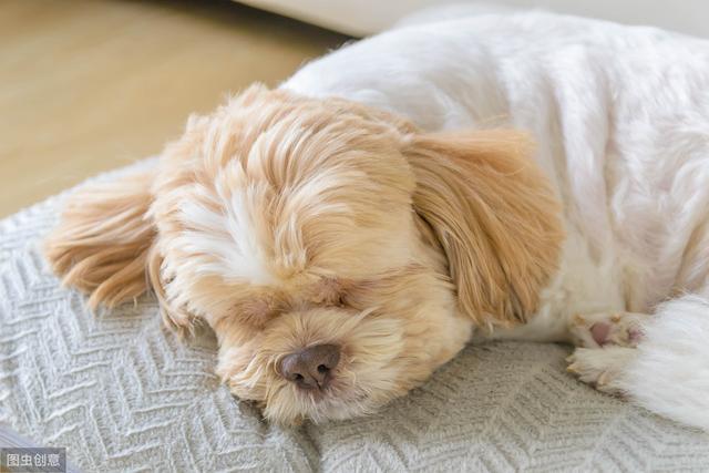 狗狗蜷着睡是什么原因