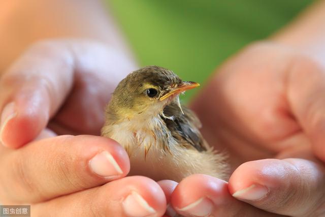 善良的小鸟善良的小鸟作文500字