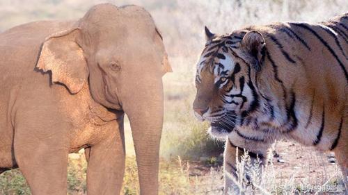 老虎和恐龙谁厉害