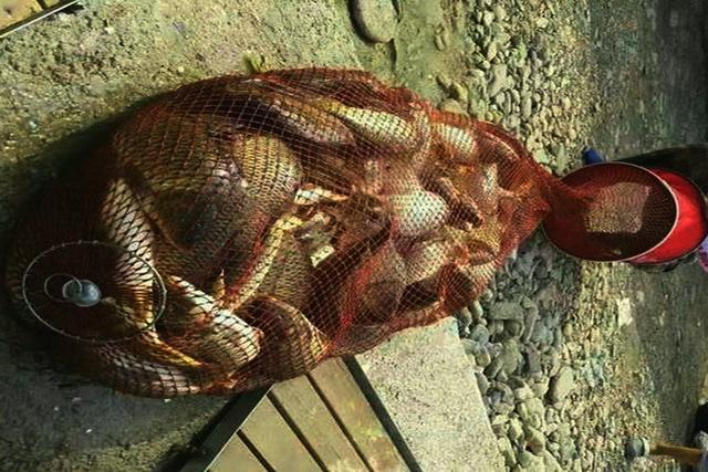 简陋的鱼竿在小河坑,能钓上鱼吗?该怎么办