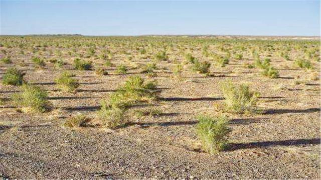 """支付宝""""蚂蚁森林""""真的会在沙漠种树吗?"""
