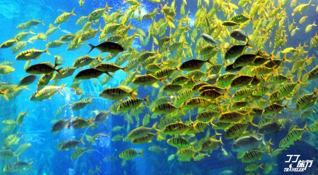 青岛海底世界的作文300字第1篇图片