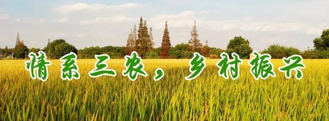 中茶所专家为省茶业职业技能培训班学员授课