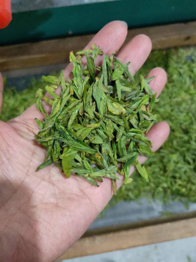 龙井茶的味道怎样?