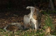 就是因为一个帅气的落地动作,这只松鼠快被网友玩坏了!