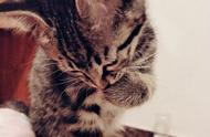 女生为什么爱养猫?她可能说出了原因……