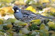 每年3.77亿只,澳洲鸟类被人类遗弃的宠物吃到濒危!
