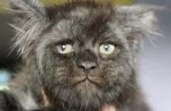 这户人家的猫竟然长着人脸,我只想问:奴才,你对猫妈做过什么