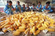 小學4畝荒地改農場,學生種糧食蔬菜分享給全校師生