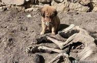 狗狗有4大恐惧事物,其中一个是同类,主人最好别让它看到