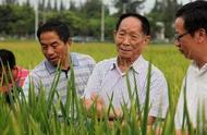 袁隆平对转基因的态度:从来未曾中立,不卖粮给中国,咱就麻烦了