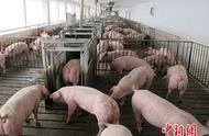 甘肃省定西市岷县发生非洲猪瘟疫情 发病265头