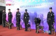 """年纪小""""功夫""""高 北京市公安局首批警用克隆犬入警"""