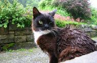 猫咪为啥会抗拒洗澡?不只是害怕水,它讨厌被铲屎官逼着去洗澡