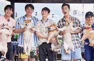 《向往的生活》张子枫抱狗姿势火了,网友称没有对比,就没有伤害
