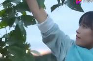 李子柒为吃核桃,一个人居然爬这么高的树,这身手厉害啊!