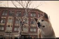 有这么一只可爱的秋田犬,被遗弃在车站,你会忍心让它流落街头吗