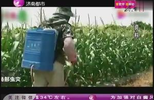 """这个""""幺蛾子""""太危险!能致粮食绝产!山东省宣布加强监测防控!"""