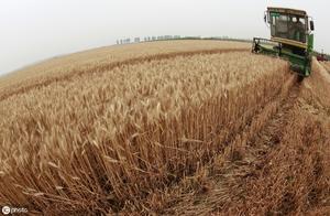 """2019年小麦""""丰收"""",农民只能欲哭无泪——因为卖价可能不及去年"""