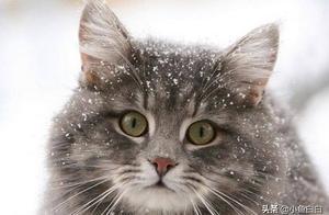 这几种猫咪居然是最受欢迎的猫咪,你家猫咪上榜了吗?
