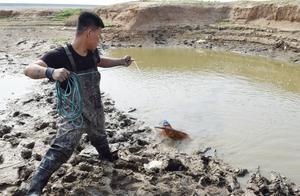 农村小伙用撒网水坑里捕鱼,第三网捕到了多少鱼?小伙大喊爆网了