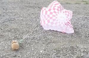 仓鼠3000英尺高空跳伞,它都吓蒙了,仓鼠:这是什么创意呀?
