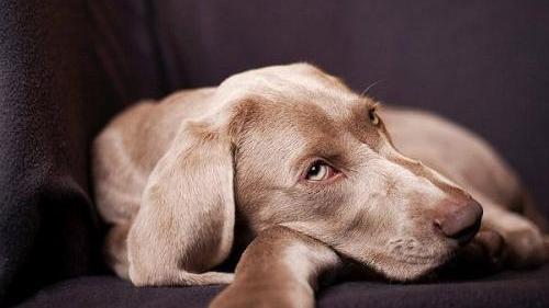 如何防止狗狗在我家门口撒尿
