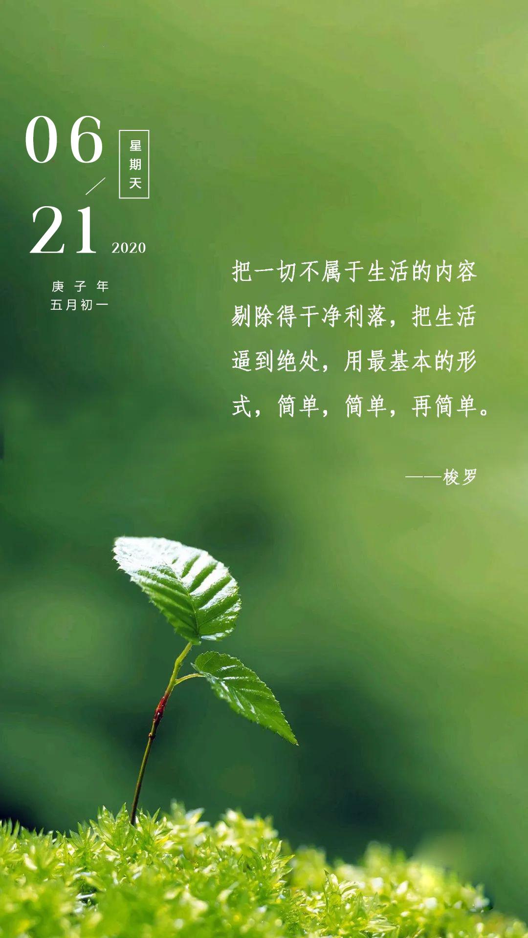夏至早安心语正能量说说图片日签:你朝阳光努力向上,生活便会单纯美好